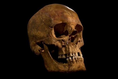 Bone chemistry reveals royal lifestyle of Richard III