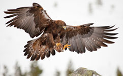 Call to use raptors to monitor European pollution