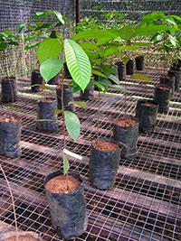 Carbohydrates help plants survive drought