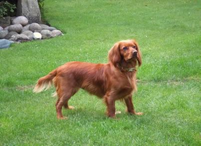 Current VetCompass understanding on canine health