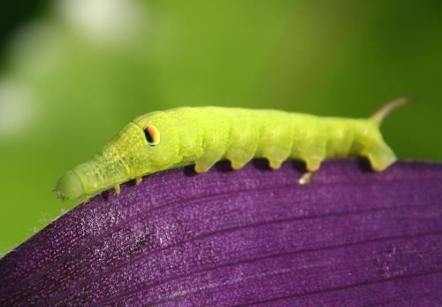 Despite metamorphosis, moths hold on to memories from their days as a caterpillar