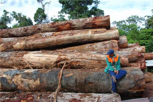 Devastating human impact on the Amazon rainforest revealed