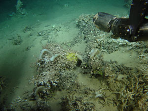 Different sponge species have highly specific, stable microbiomes, MBL team reports