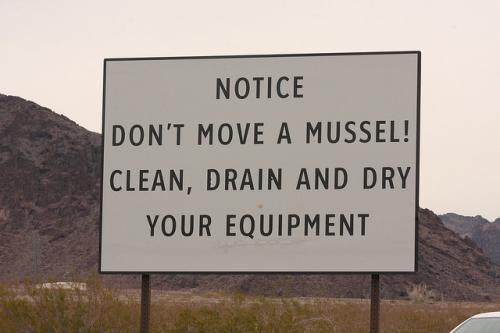 Don't move a mussel (or a clam, or a snail)