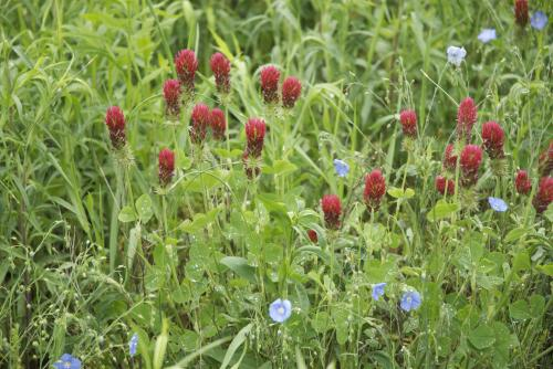 Drifting herbicides produce uncertain effects
