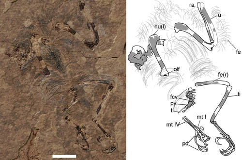 First enantiornithine bird found from the Upper Cretaceous of Southern China