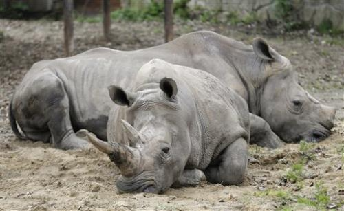 Wildlife numbers halved over past four decades: WWF