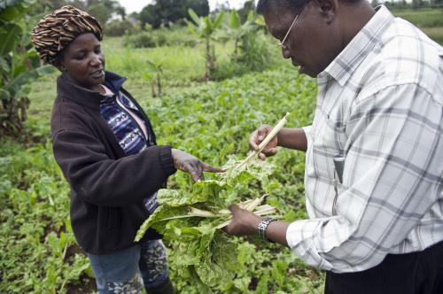 Hidden crop pest threat to poorer nations revealed