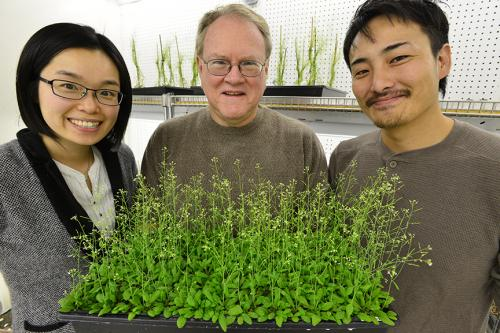 MU researchers find receptors that help plants manage environmental change, pests and wounds