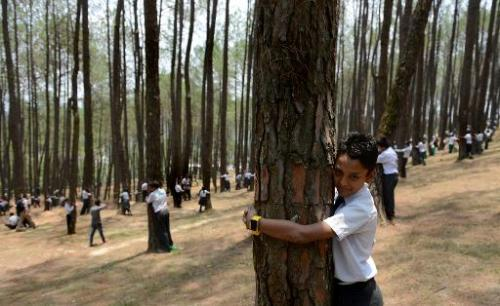 Nepalese school children hug trees as they celebrate World Environment Day in the forest of Gokarna village, on the outskirts of