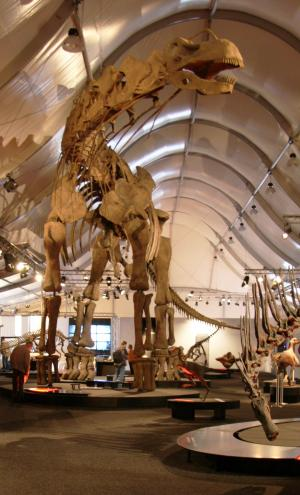 New research on sauropod gigantism summarized in publicly available collection