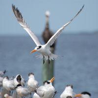 Ornithologists discover flight causes genome shrinkage