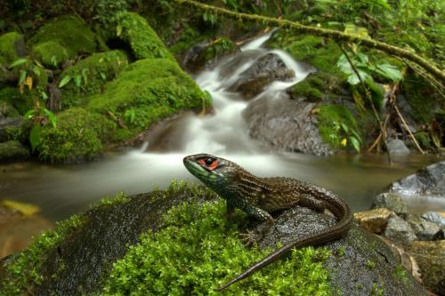 Peru's Manu National Park sets new biodiversity record