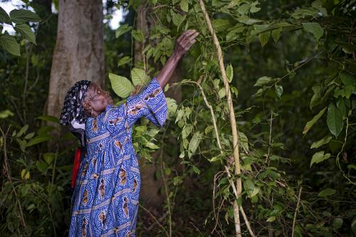 'Remarkable social progress' when forests are FSC certified - new study confirms