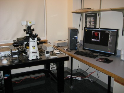Researchers harness the power of super-resolution microscopy