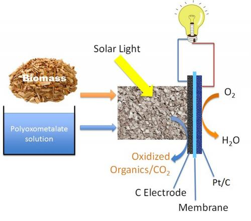 Solar-induced hybrid fuel cell produces electricity directly from biomass