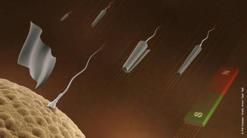 Sperm-bots are made to move in desired direction