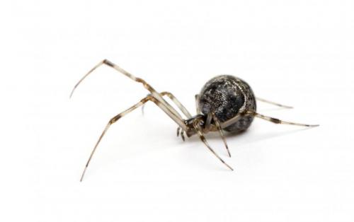 Spiders spin possible solution to 'sticky' problems