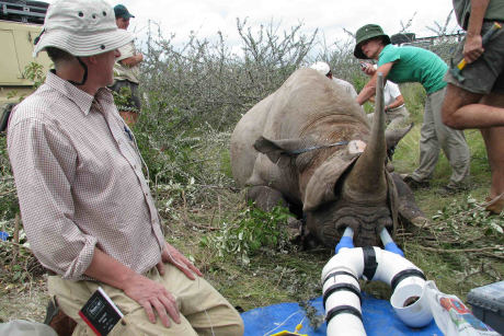 Study helps prevent rhino deaths during relocation