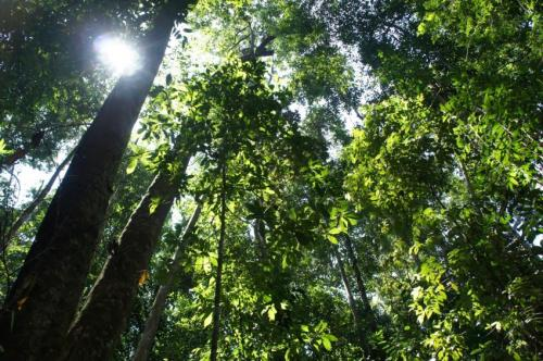 Super-charged tropical trees of Borneo vitally important for global carbon cycling