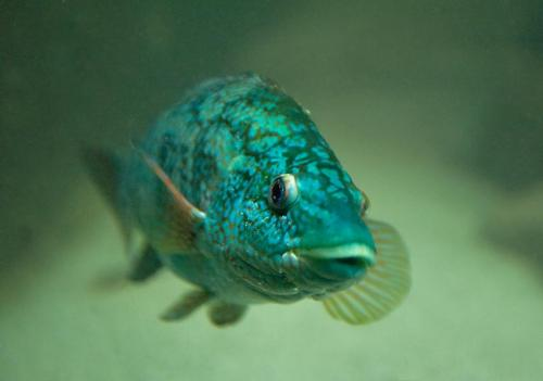 The key to adaptation limits of ocean dwellers