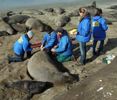 Tracking reveals hidden lives of elephant seals