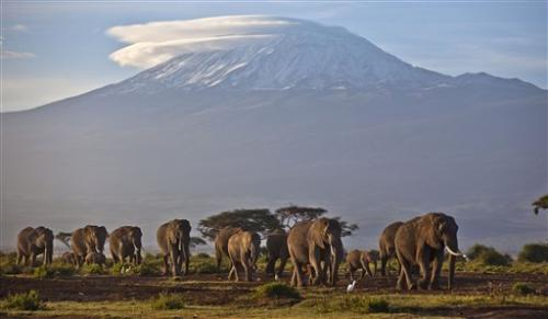 100,000 elephants killed in Africa, study finds