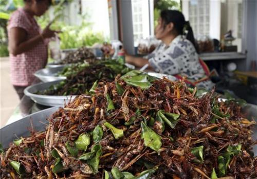 Edible insects a boon to Thailand's farmers