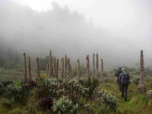 Mountain climbers visit the Rwenzori mountain range on the border between Uganda and the Democratic Republic of Congo on March 8
