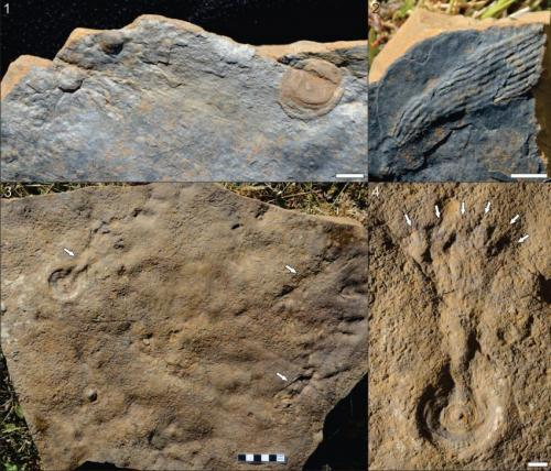 MU researchers find rare fossilized embryos more than 500 million years old