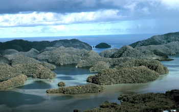 Palau's coral reefs surprisingly resistant to ocean acidification