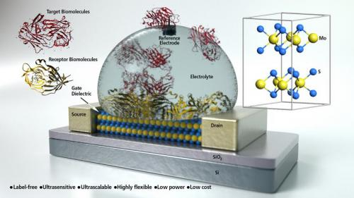 UCSB researchers develop ultra sensitive biosensor from molybdenite semiconductor