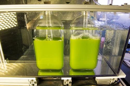 Unique bioreactor finds ideal locations for algae production