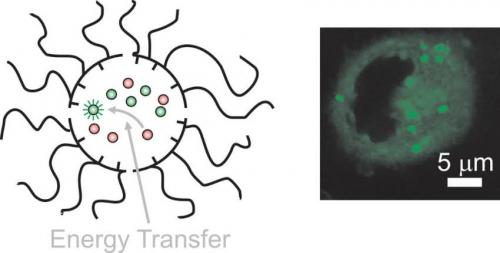Scientists develop a 'nanosubmarine' that delivers complementary molecules inside cells