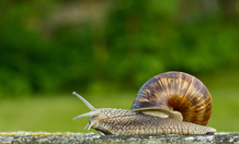 Scientists find best way to rid a garden of snails