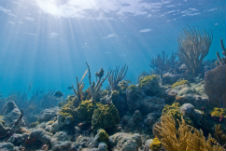 Researchers reveal how ocean bacteria use light to grow