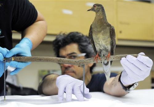 All gone: How erasing billions of birds shocked us
