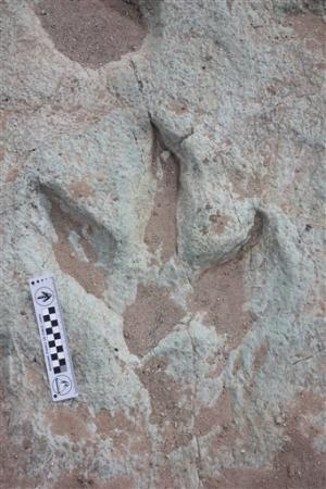 Dinosaur footprints set for public display in Utah