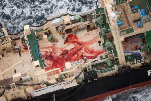 Handout photo taken on January 5, 2014 by Sea Shepherd Australia Ltd shows crew members walking amongst blood, allegedly from fo