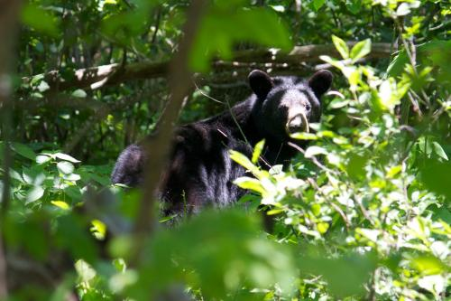 New insights into the evolutionary history of bears