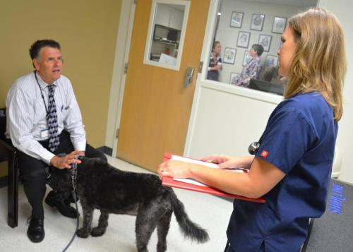 Veterinary researchers use nanoparticles to target cancer treatment in dogs, cats