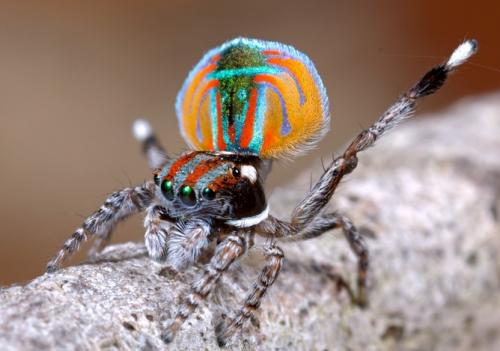 Why are we afraid of spiders?