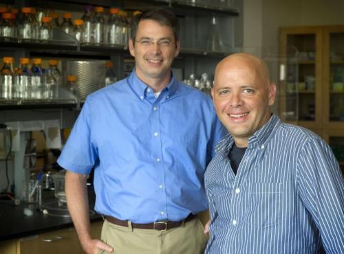 Researchers suggest 'Fragile Y Hypothesis' to explain chromosome loss