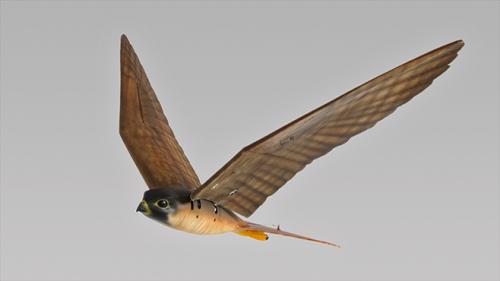 3D-printed robotic birds of prey are undergoing trials