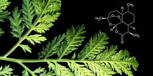 Understanding natural compounds