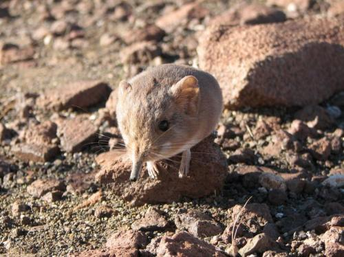 New species of small mammal discovered by scientists from California Academy of Sciences