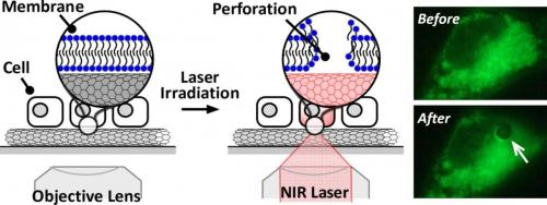 Carbon nanotubes and near-infrared lasers promise a cost effective solution for cell membrane manipulation