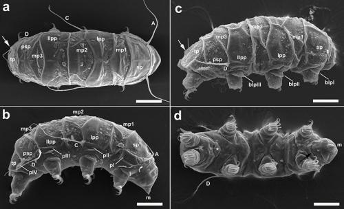 Discovery of a tiny new animal in Antarctica's Victoria Land