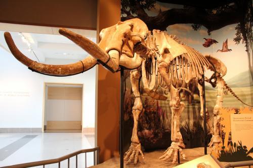 Climate change key to megafauna deaths