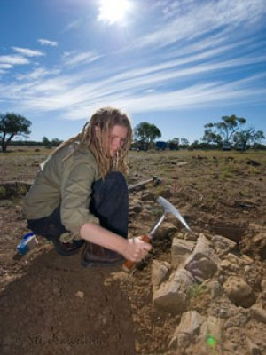 New species of fossilised wood found in Winton